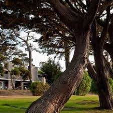 Lighthouse Lodge Cottages by Lighthouse Lodge U0026 Cottages Pacific Grove Ca Jobs Hospitality