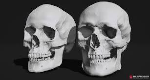 Skull Viewer Skull Sketcher