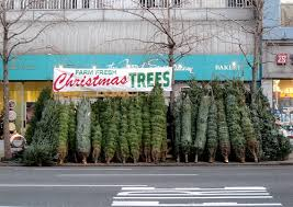 your christmas tree five alternatives crafting a green world