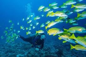 scuba q u0026 a common questions asked by nondivers scuba diving