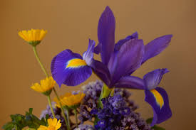 in a vase with an iris atop a small sunny garden by amy myers