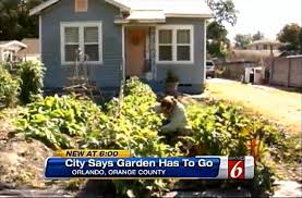 orlando gardener vows to fight anti front yard veggie garden
