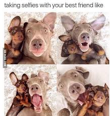 Cute Best Friend Memes - taking selfies with your best friend like selfies animal and dog