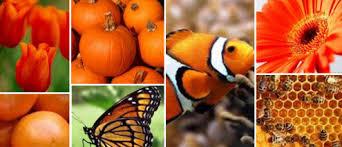 colour psychology the meaning of orange haller