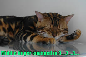 Middle Finger Cat Meme - middle finger engaged in 3 2 1 lolcats lol cat memes