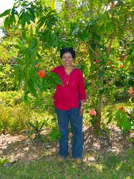 plants native to florida how plants tell the story of florida u0027s immigrant history wlrn