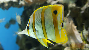 the 10 best saltwater fish for beginners fishkeeping advice