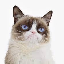 Meme Generator White Background - grumpy cat white background blank template imgflip