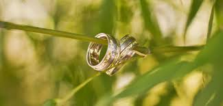 my wedding band how to complement my wedding set with an anniversary band