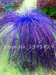 aliexpress buy 200 pcs bag fiber optic grass seed mixed