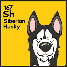 periodic table of dogs the 167th elemutt of the dog table is the siberian husky the dog