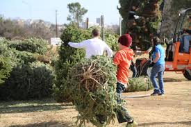recycle your holiday tree after christmas austintexas gov the