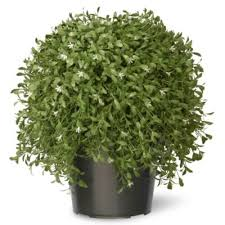 artificial plants buy artificial plants from bed bath beyond