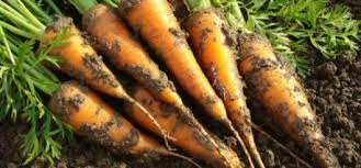 Fall Vegetable Garden Plants by Get Gardening Tips U2013 Tips And Ideas For Home Gardening Enthusiasts