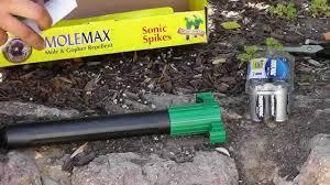 how to keep chipmunks squirrels mice moles u0026 gopher away youtube