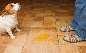 how to prevent damage to tile floors as a pet owner the grout medic