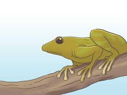 how to find a frog with pictures wikihow