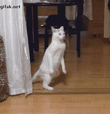 Drunk Cat Meme - when you try to walk up to the bar while you re drunk cats