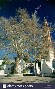 a large tree stands in the courtyard in front of the church in