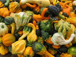 what to do with ornamental gourds dan330