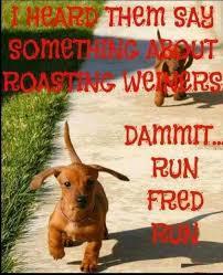 Wiener Dog Meme - wiener dogs meme by rrlcello13 memedroid