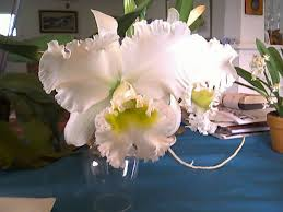 cattleya orchids cattleya orchid care learn how to grow these beautiful orchids