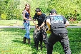 Animal Trainers Salary Can I Make A Living As A Certified Professional Dog Trainer