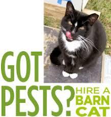 Barn Cat Names Colony Cats U0026 Dogs