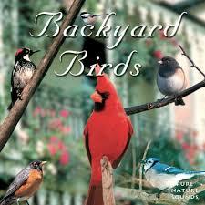 naturescapes backyard birds identification guide cd bird call