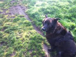 Landscaping Portland Oregon by Dog Friendly Portland Oregon Landscaping Design Ideas By