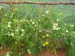 annadana organic heirloom vegetable seeds home