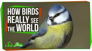 uv light for birds how birds really see the world youtube