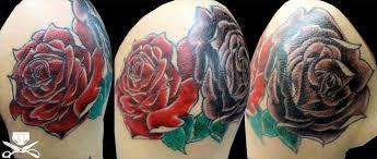 rose petals falling lightly hautedraws
