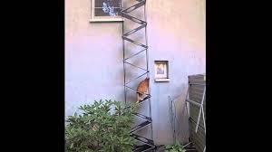katzenleiter balkon falt katzenleiter ii