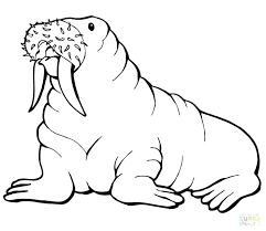 coloring page for walrus metsovo info wp content uploads 2017 12 walrus col
