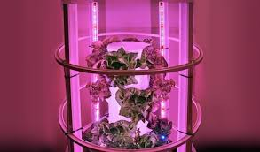 Indoor Vegetable Gardening Beginner by Everything You Need To Know About Indoor Gardening