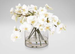 white orchids white orchids in glass cylinder florals trees