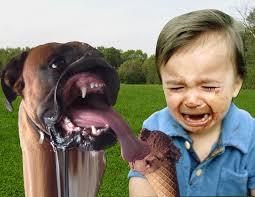 boxer dog mean psbattle derpy boxer wants a kiss photoshopbattles