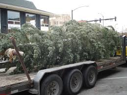 christmas tree delivery the historic hotel boulderado christmas tree delivery