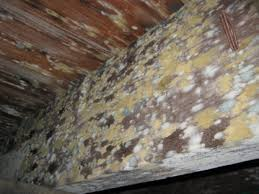 the 6 most common causes for attic mold growth and what to do about it