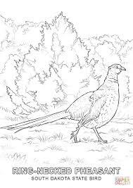 state bird of south dakota south dakota state bird coloring page free printable coloring pages
