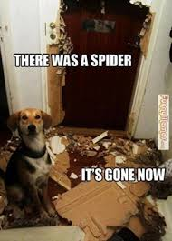 Kill Spider Meme - how to get rid of spiders in your house basement or garage