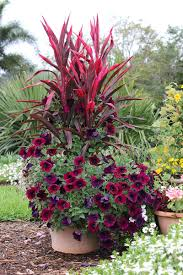 Patio Container Garden Ideas Container Combo Ideas From Costa Farms Costa Farms