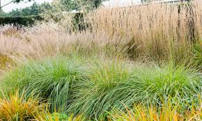 ornament planting ornamental grasses in containers horrifying