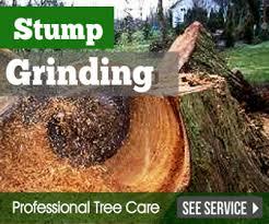 tree service cincinnati affordable cincinnati tree removal