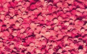 flower petals colourful flower petals weneedfun