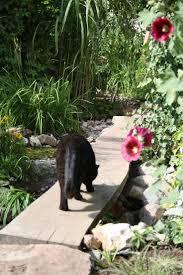 Tropische Pflanzen Im Garten Die Besten 25 Tropischer Garten Ideen Auf Pinterest Tropischer