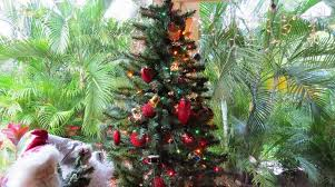 christmas trees and palm trees costa rica happy
