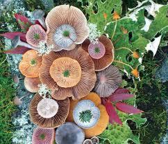 vibrant mushroom arrangements photographed by jill bliss