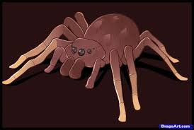 learn how to draw an easy spider bugs animals free step by step
